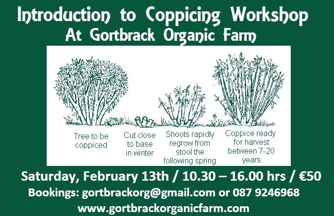 Coppicing workshop 2016